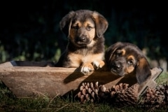 Dogs-2 copy